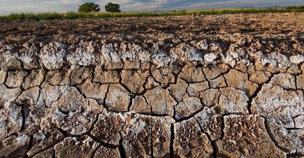 土壤盐碱化