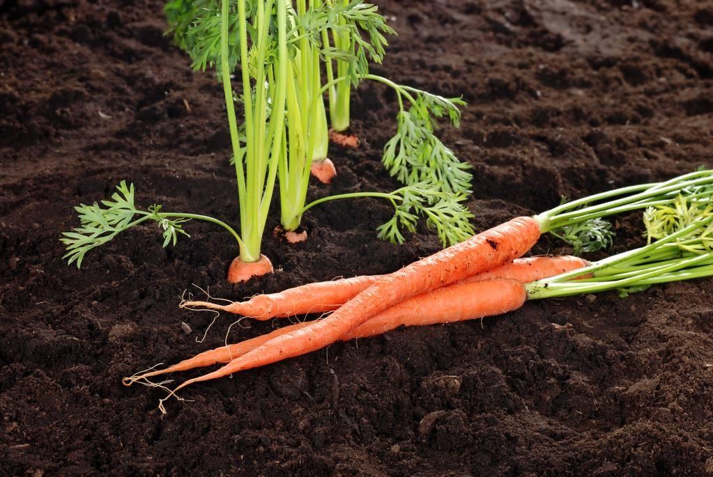 土壤酸化改善