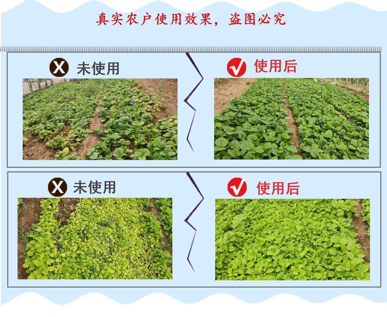 蔬菜营养液使用效果